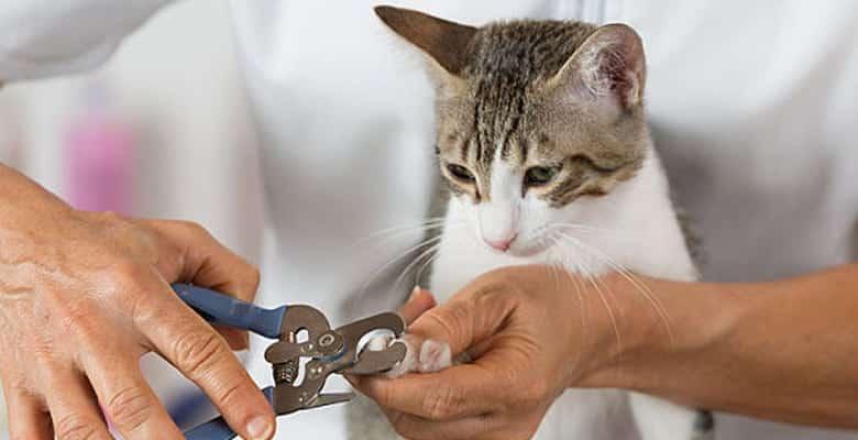 Cortar las uñas a un gato