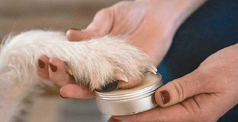 Cremas para curar las almohadillas de los perros