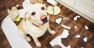 Cubos de basura anti perros