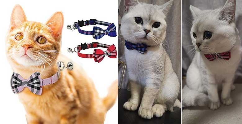 Collar original para gatos - DAIXI
