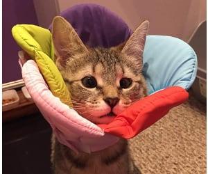 Collar isabelino original para gatos y perros - DELIFUR