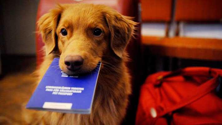Documentación y normativa para viajar con perro