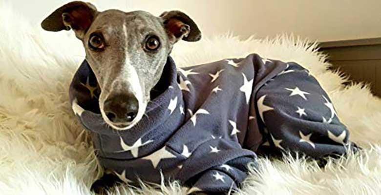 Pijama para galgos y otros lebreles - Dog and Home
