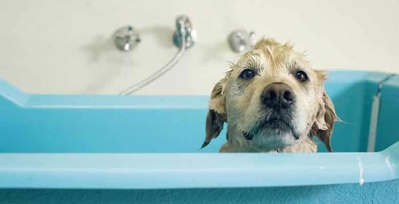 Duchas y bañeras para perros