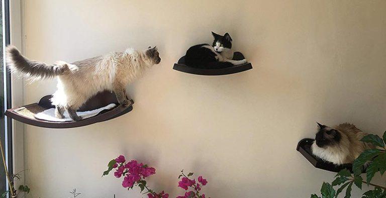 Estanterías para gatos