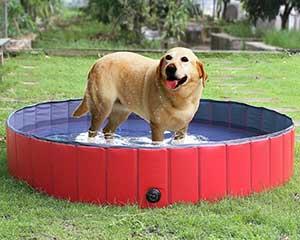 Piscina para perros grandes, medianos y pequeños (plegable y desmontable) - Lionto by Dibea