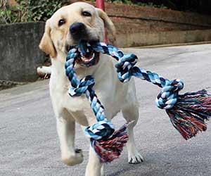 Mordedor para perros tipo cuerda - Forwindog