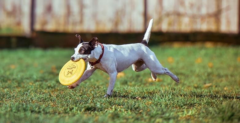 Frisbees para perros