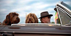 Protectores y fundas de coche para perros