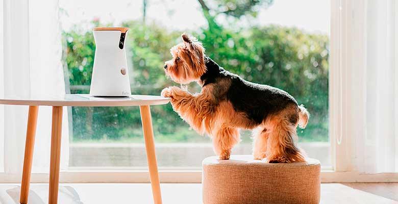 Furbo y otras cámaras para perros y gatos