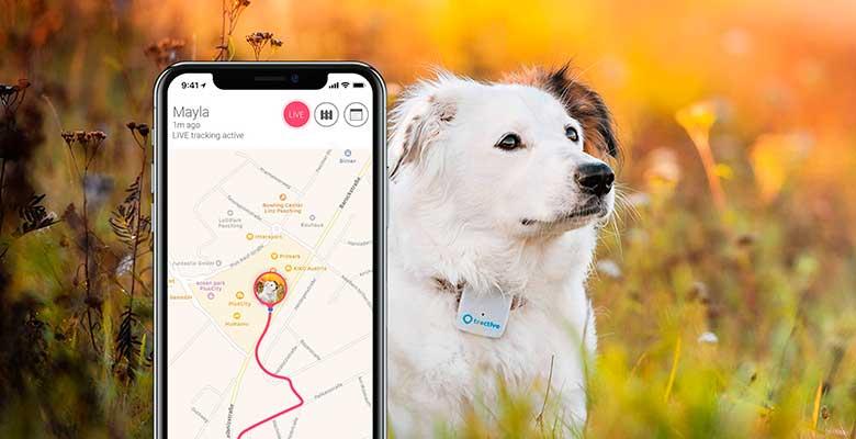 GPS para perros y gatos