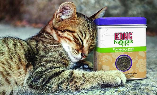 Gato con catnip seco