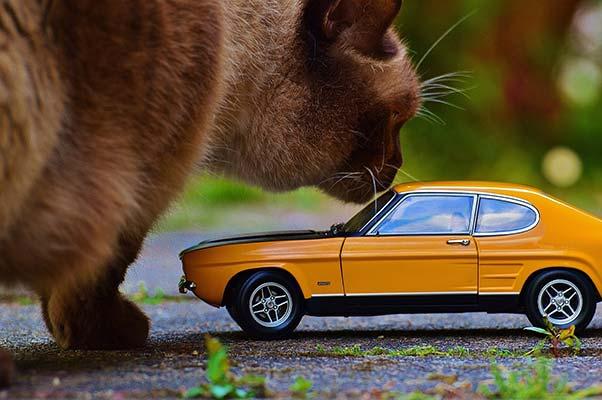 Gato con coche en miniatura