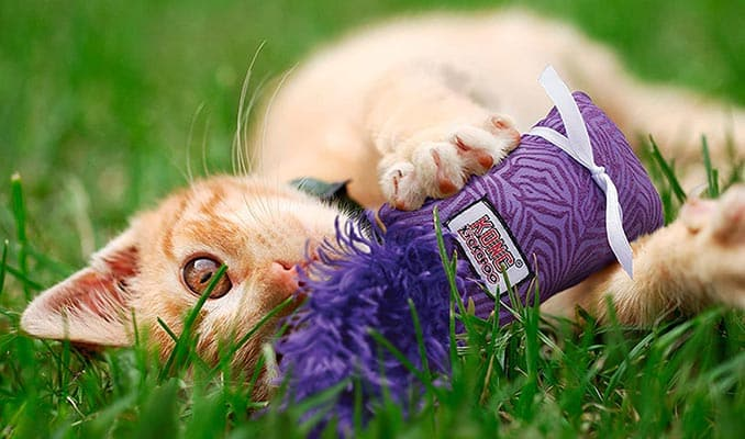 Gato con juguete relleno de catnip o hierba gatera