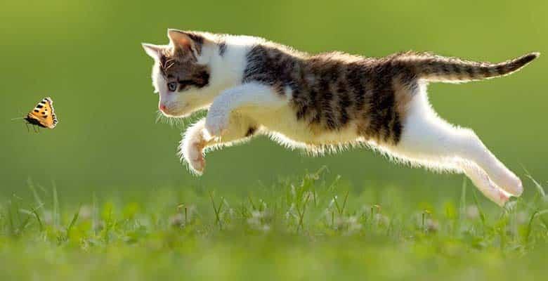 Gato corriendo tras tomar vitaminas