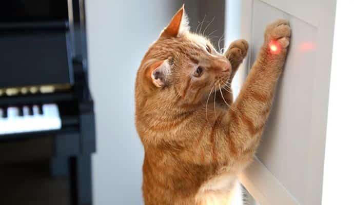 Gato jugando con puntero láser