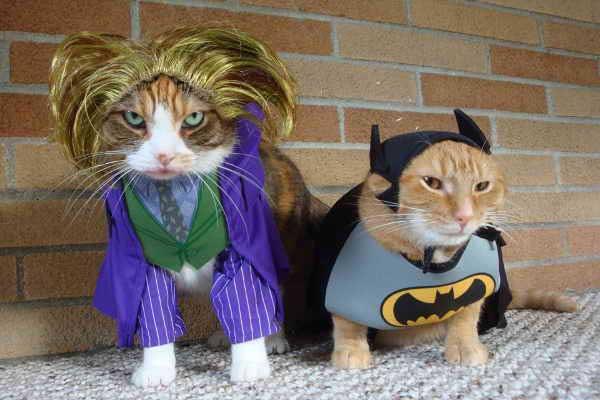 Gatos disfrazados de Batman y Joker