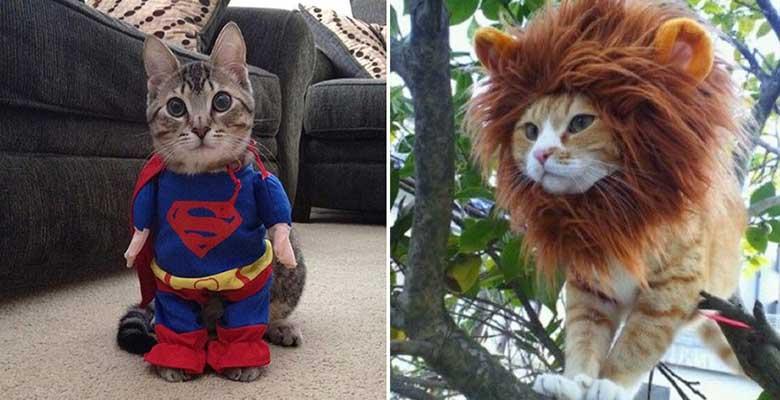 Gatos disfrazados de león o Supermán