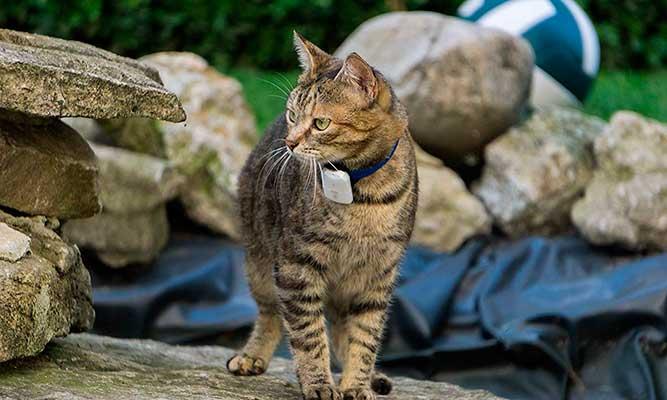 Localizador para gatos y perros con funcionamiento por ondas de radio - Girafus Pro-Track-Tor
