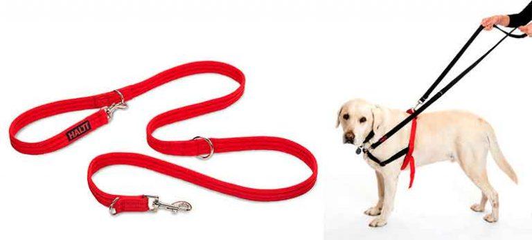 Correa de adiestramiento para perros - Halti