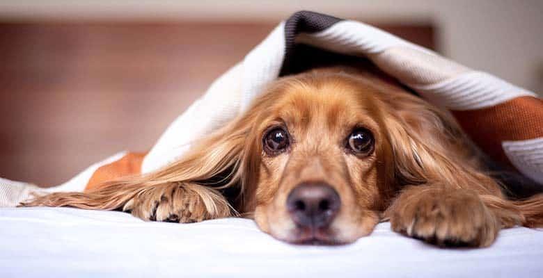 Hoteles que admiten perros y mascotas