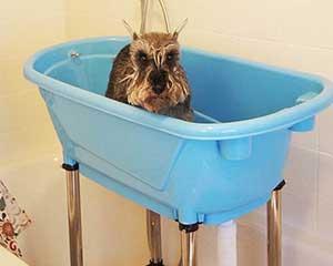 Bañera elevada de plástico para perros - Ibañez