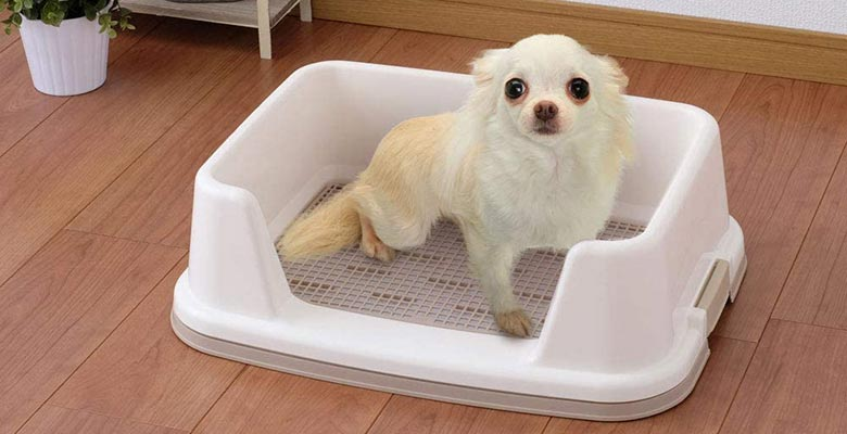 Inodoros para perros