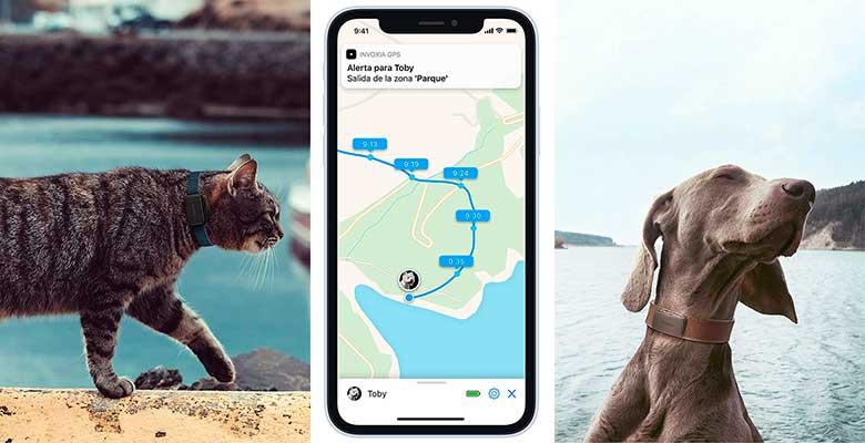 Localizador GPS para perros y gatos con muy larga autonomía - Invoxia Pet Tracker
