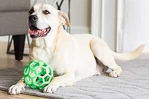 Mordedor para perros con diseño en forma de pelota - JW HOL-EE Roller