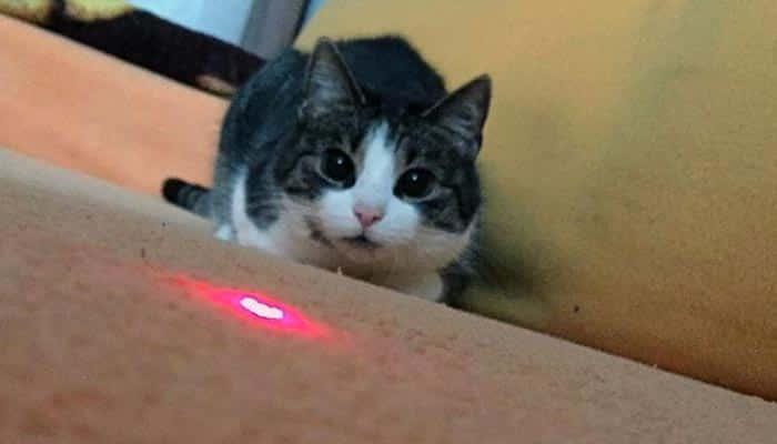 Juguete láser para gatos
