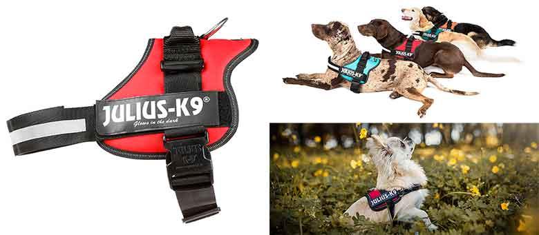 El arnés para perros más popular del mercado - Julius K-9