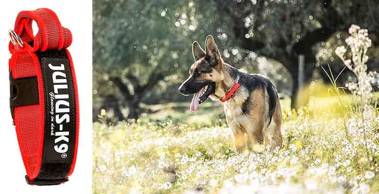 Collar para perros con asa incorporada - Julius-K9