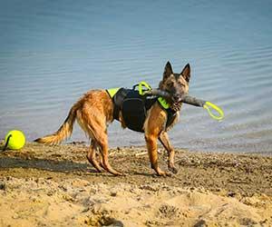 Mordedor de tela francesa para perros - Julius-K9