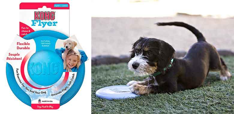 Kong Flyer Puppy: el disco volador para cachorros