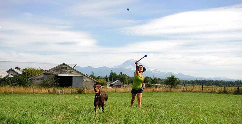 Lanzadores de pelotas para perros