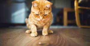 Láser para gatos