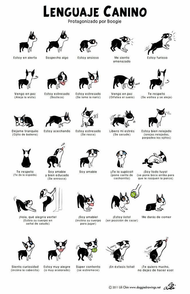 Lenguaje Canino - Ilustración de Lili Chan