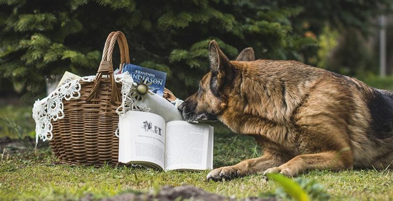 Libros de perros y de adiestramiento canino