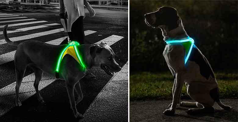 Arnés de perro con luz - Noxgear LightHound