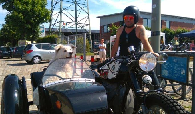 Llevar a un perro grande en moto con sidecar