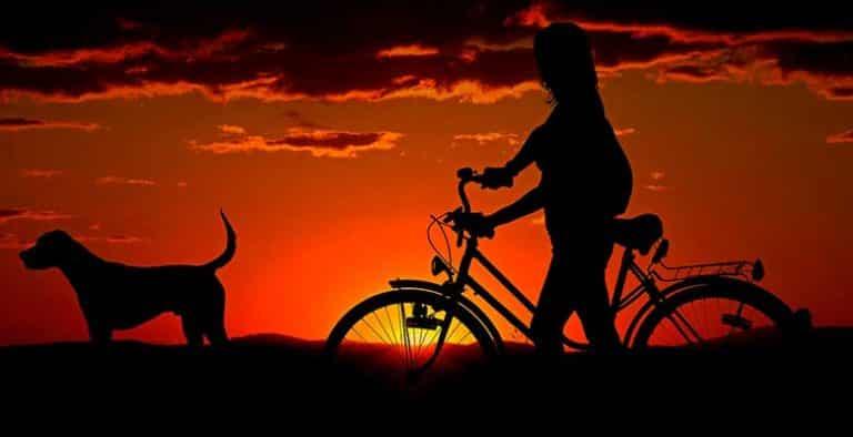 Cómo llevar al perro en bicicleta: consejos y mejores cestas, remolques y correas especiales