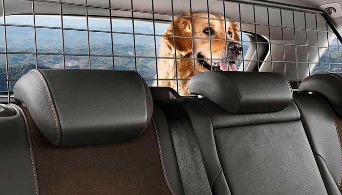 Llevar al perro en el maletero del coche