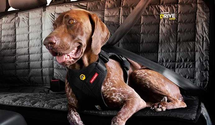 Llevar al perro en los asientos traseros del coche