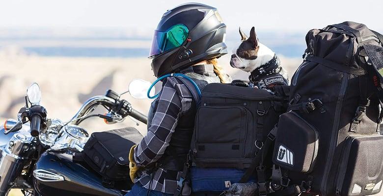 Llevar al perro en moto