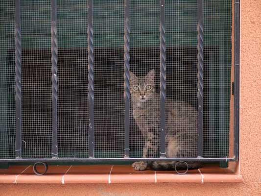 Proteger rejas de balcón de la caída de un gato