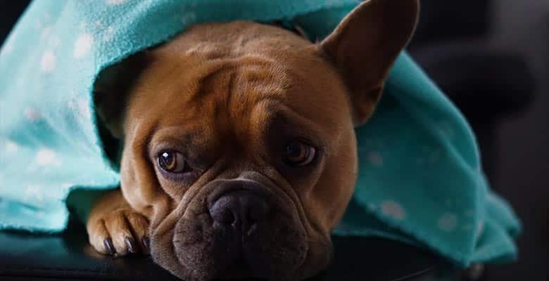 Mantas para perros y gatos