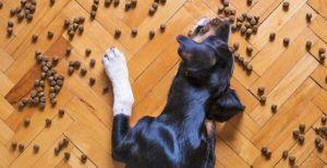 Medidores de pienso para perros y gatos