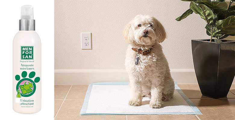 Atrayente de micciones para perros - Menforsan