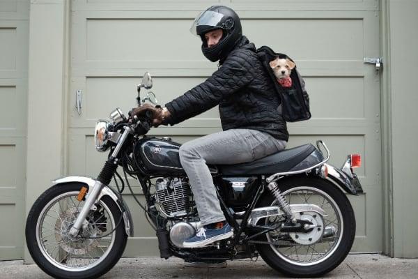 Mochila para llevar al perro en moto