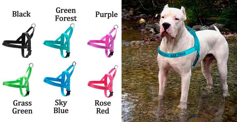 Arnés para perros personalizado - Moonpet